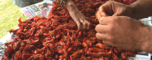 WHAT LOUISIANANS WISH OTHERS KNEW ABOUT BOILED CRAWFISH