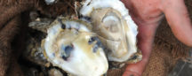 How A Short Oyster Season Could Burden Cameron Workers