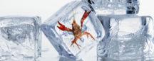 Ice Station Crawfish