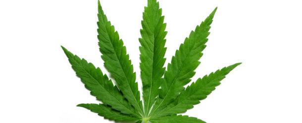 Medical Marijuana Coming To Lake Charles